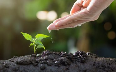 Agriculture , Growing plants , Plant seedling , Hand nurturing and watering young plants growing on fertile soil with natural green background.